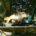 Schöne Karpfen am kleinen Hollosi-Angelteich
