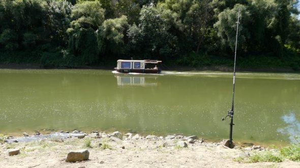 Bootsverkehr beim Welsangeln am Fluss Körös in Ungarn