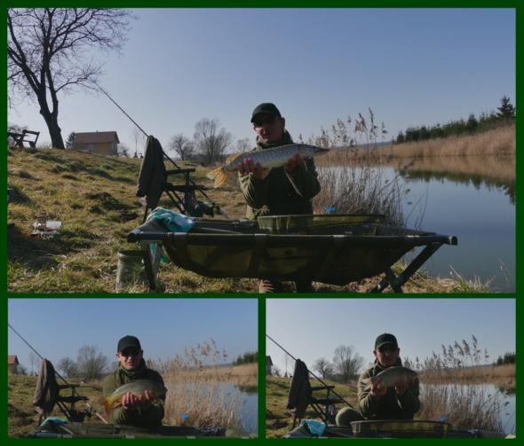 Die drei gefangenen Fische beim ersten Feederangeln 2021