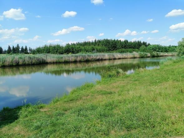 Wieder Fischsterben am kleinen Vereinssee in Pinkamindszent